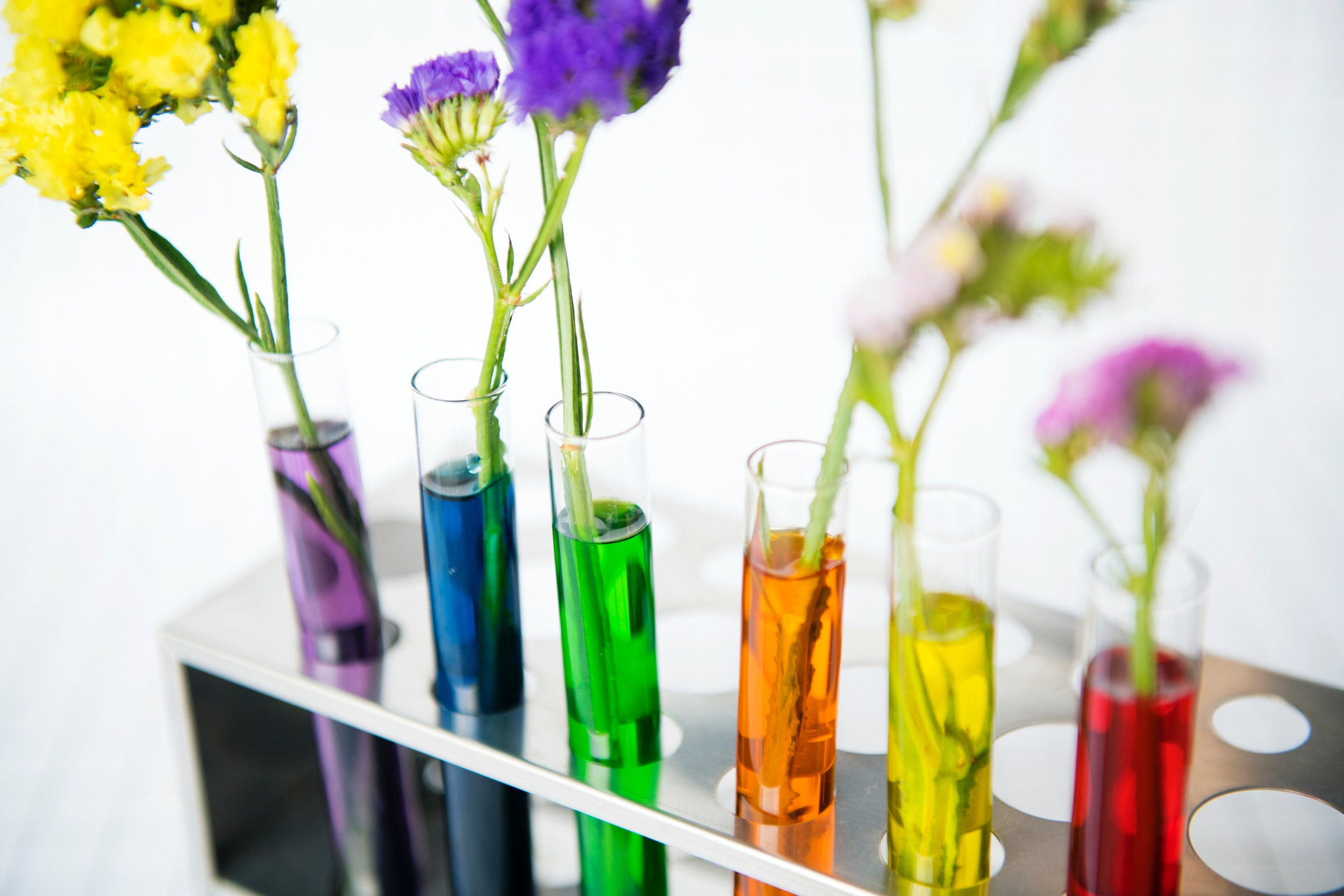 Fine arts degree problem solving creatively through flowers on test tubes